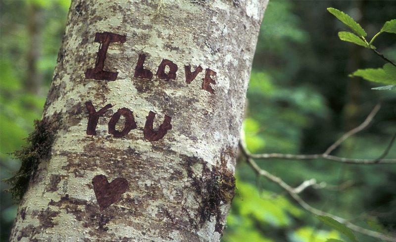 I love you su corteccia albero