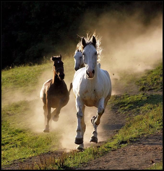 cavalli in corsa prateria
